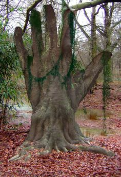 Hand Tree.....is this for real?