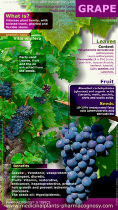 GRAPE. Infographic. Summary of the general characteristics of the Grape plant (Vitis vinifera). Medicinal properties, benefits and uses more common of Grape fruit, leaves and seeds.  http://www.medicinalplants-pharmacognosy.com/herbs-medicinal-plants/grape-benefits/infographic/