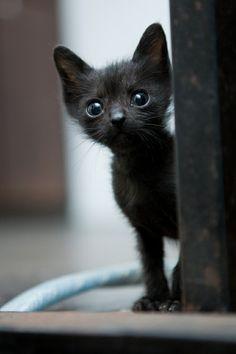 Quiero un gato!