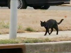 Running Cat Goes the Distance – and Trains Every Day