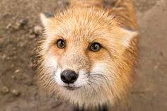 Resultado de imagen para zao fox village