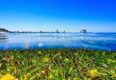 Rottnest never disappoints  #overunder #halfhalf #rotto #rottnest #wa #seagrass #parkerpoint #boats #ovean #underwaterphotography #marine #travel #explore #nature #bliss #rottnestisland #underwater #bestofbothworlds by wildwestphotos http://ift.tt/1L5GqLp