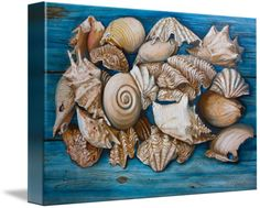 """""""Sea Shells"""" by Yvonne Ayoub, London, England/Skiathos, Greece // From an original painting in oils on canvas, size 100 x 70 cm of sea shells on weathered wood // Imagekind.com -- Buy stunning fine art prints, framed prints and canvas prints directly from independent working artists and photographers."""