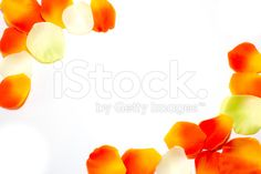 #frame of #petals royalty-free stock photo