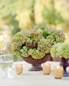 Hortensien, hydrangeas, hortensje