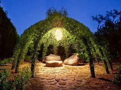 Secret garden made of willow trees arched together with interwoven branches.