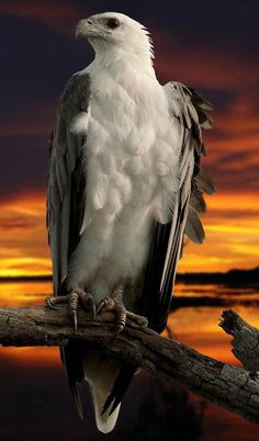 Sea Eagle - Most Beautiful Pictures
