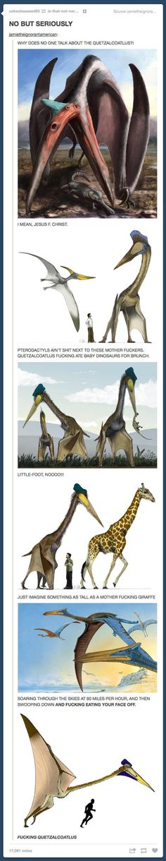 The Quetzalcoatlus…how did Jurassic Park never teach me about this! << because Jurassic Park didn't even teach about actual velociraptors Tumblr Funny, Funny Memes, Hilarious, Funny Quotes, Funny Videos, Jurassic Park, Jurassic World, Amigurumi Animals, Doja Cat