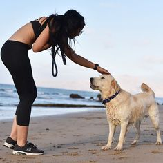 #actijoy #dog #dogtraining #goldenretriever #dogonbeach