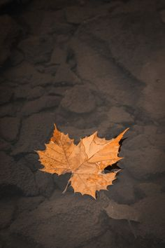 Leaf on Water - Bopbie Photography