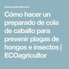 Cómo hacer un preparado de cola de caballo para prevenir plagas de hongos e insectos | ECOagricultor