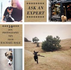 10 Tips for Photographing Your Dog from Rachael Hale | Design*Sponge