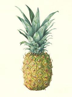 Christine Battle botanical illustrator