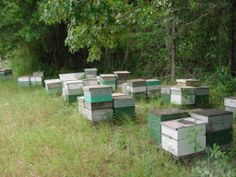 Langstroth hive - Wikipedia, the free encyclopedia