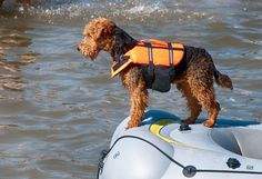 1206be7c69 Pet Safety Precautions for Lakeside Living - Dr. Mahaney tells us how to  stay safe