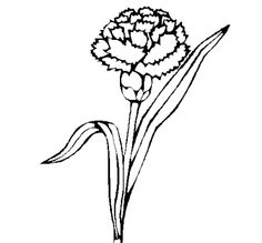 Coloring Page 2018 for Claveles Para Colorear, you can see Claveles Para Colorear and more pictures for Coloring Page 2018 at Children Coloring. Colorful Pictures, More Pictures, Free Hd Wallpapers, Any Images, Simple Lines, Carnations, Botanical Art, Adult Coloring Pages, Flower Crafts