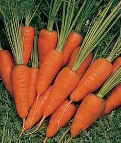 Pull sweet carrots all winter with high-quality carrot seeds available from Burpee. Find sweetly flavored carrots of wild colors in the large collection of organic & hybrid carrot seeds in stock at Burpee. Burpees, How To Plant Carrots, Sweet Carrot, Still Tasty, Bean Pot, Carrot Seeds, Easy Garden, Garden Ideas, Cucumber Salad