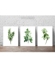 Green Herbs Set of 3 Fine Art Prints. Thyme Botanical Poster Dining Room Illustration. Herbs Garden Home Decor. Parsley Art For Kitchen. Basil
