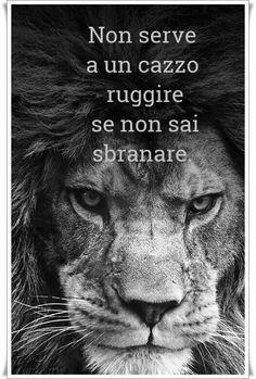 non serve ruggire se non sai sbranare Leo Virgo Cusp, Astrology Leo, Leo Zodiac, My Zodiac Sign, Zodiac Quotes, Zodiac Facts, All About Leo, Lion Quotes, Leo Star
