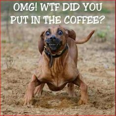 More...caffeine....