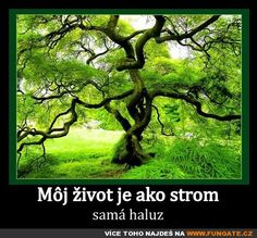 Můj život je jako strom Native American Proverb, Magical Images, Al Pacino, Embedded Image Permalink, Trees To Plant, Mystic, Rap, Hollywood, Funny