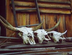 For the ranch Big Sky Country, Country Girls, Country Style, Cow Skull, Skull Art, Bull Skulls, Up House, Animal Totems, Cowboy And Cowgirl