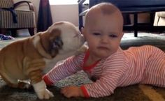 This Baby Getting Covered in Kisses By a Bulldog Puppy Is Ridiculously Cute (Watch!)