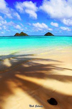 Palm Tree Shadows, Oahu on the east side of the island, Hawaii