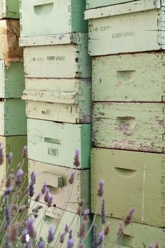 Chef's Secret Roof Garden: The Fairmont Hotel A Chef's Secret Roof Garden: Honey bees at The Fairmont San Francisco!A Chef's Secret Roof Garden: Honey bees at The Fairmont San Francisco! Mint Green Aesthetic, Verde Neon, Bee Boxes, Fairmont Hotel, Living Vintage, Green Photo, Photocollage, Save The Bees, Bee Happy
