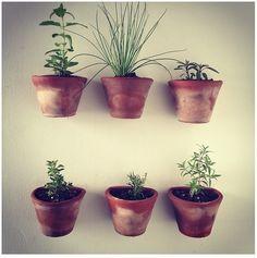 El huerto en casa #plantas #macetas