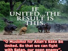 OH MUSLIM BROTHERS & SISTERS. BE UNITED.