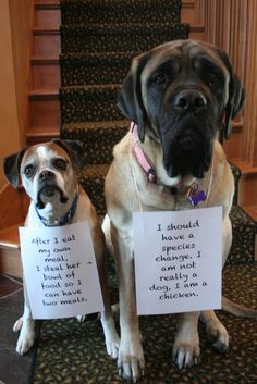 """The Little One said, """"After I eat my own meal, I steal her bowl of food so I can have two meals."""" """"I should have a species change. I am not really a dog, I am a chicken"""" Said the Big One"""