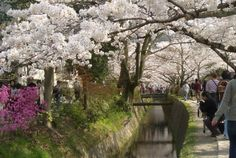 Philosopher's Path, Sakyo Ward, Japan - stone path winds its way along a canal from Ginkakuji to Nanzenji