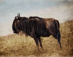 Savanna Animals, Moose Art, Behance, Photoshop, Profile, Horses, Gallery, Check, Photography