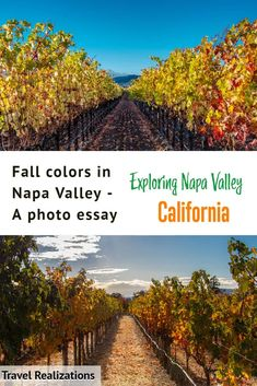 Fall colors in Napa Valley are spectacular. Drive along the Silverado Trail to witness sun-dappled gold vineyards and beautiful wineries. Find out where to see fall colors in Napa Valley and enjoy great wine. #NapaValley #California #FallColors Canada Travel, Travel Usa, Photo Essay, Napa Valley, Travel Guides, Travel Tips, Travel Photos, Travel Inspiration, Travel Destinations