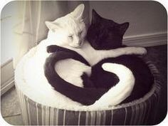 black or white - real cat love!