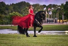 Most Beautiful Pictures, Cool Pictures, Friesian Horse, Equine Photography, Dressage, Good Times, That Look, Horses, In This Moment