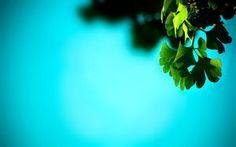 癒されるPCデスクトップ壁紙【ヒーリング・リラックス効果】画像(グリーン・葉っぱ・緑) - NAVER まとめ