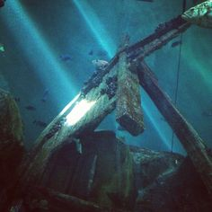 Light beams piercing the water surface to illuminate a shipwrecked anchor #photography