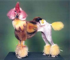 CHILL BOX OF PICS: Funny Poodle Haircuts--cockadoodledoo!