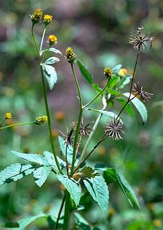 Plantas nativas brasileiras comestíveis e pouco conhecidas - greenMe.com.br
