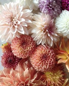 New year, old picture. A few of my favorite dahlia varieties from 2015 Anemone Flower, Flower Pots, Dalia Flower, Flower Phone Wallpaper, Hardy Perennials, Floral Bouquets, Flower Decorations, Paper Flowers, Planting Flowers
