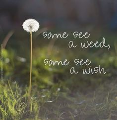 Some see a weed ~ Some see a wish!