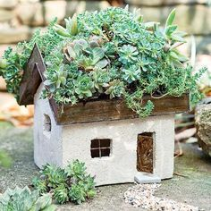 Miniature Fairy Garden Tabby Cottage  Miniature Tabby Cottage with Living Roof. Use with preserved moss, succulents or other plants with ... more