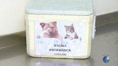 #Campanha de vacinação antirrábica para cães e gatos começa nesta segunda-feira em Salvador - Globo.com: Globo.com Campanha de vacinação…