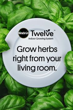 Quick To Build Moveable Greenhouse Options Grow Basil So Fresh It's From Your Living Room With Miracle-Gro Twelve Indoor Growing System. Indoor Vegetable Gardening, Hydroponic Gardening, Organic Gardening, Container Gardening, Garden Plants, Gardening Tips, Gardening Courses, Gardening Gloves, Hydroponics