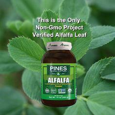 The First Non-GMO Verified Alfalfa Leaf