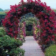 Climbing roses cover a wall, trellis or arbor. Backyard Pergola, Outdoor Landscaping, Outdoor Gardens, Pergola Roof, Arch Trellis, Rose Trellis, Metal Trellis, Wall Trellis, Garden Arbor