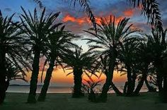 Vai beach in Crete Crete Island, Tree Forest, Greece Travel, Homeland, Palm Trees, Places Ive Been, Paradise, Environment, Earth