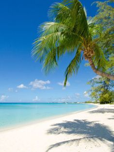 Most Beautiful Beaches, Beautiful Places, Tropical Beaches, Tropical Landscaping, Beaches In The World, Destinations, Grand Cayman, Underwater World, Vacation Places